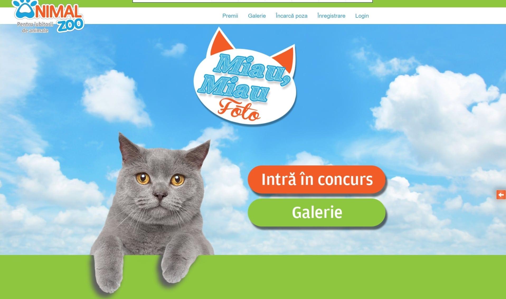 Creare site web - Concurs foto